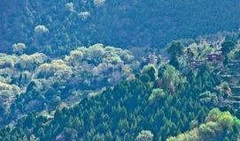Forêt de Danba, Sichuan 6 Photographie stock