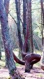 Forêt de danse, broche de Curonian, Russie Photographie stock libre de droits
