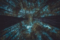 Forêt de dessous avec le ciel bleu à peine évident photos stock