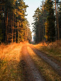 Forêt de Dulowa image stock