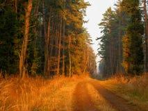 Forêt de Dulowa images stock