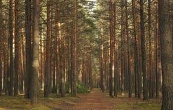 Forêt de féerie photos stock