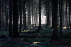 Forêt de féerie Image stock