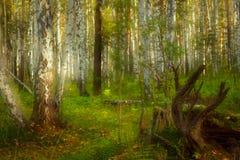 Forêt de féerie Images libres de droits