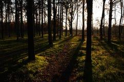 Forêt de féerie Photo libre de droits