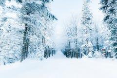 Forêt de féerie d'hiver en montagnes polonaises de Beskidy Photos libres de droits