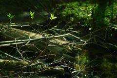 Forêt de féerie magique Photos stock
