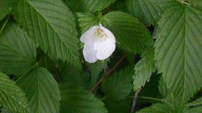 Forêt de fleur blanche Photos libres de droits