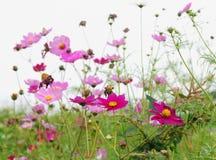 Forêt de fleurs photos stock