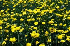 Forêt de fleurs jaunes Images libres de droits