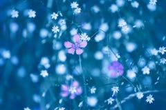 Forêt de fleurs sauvages Photo stock
