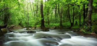 Forêt de fleuve au printemps Images libres de droits