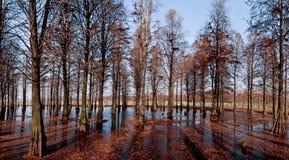 Forêt de fleuve de l'hiver Photographie stock libre de droits