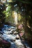 Forêt de floraison de ressort ; Fleurs de courant et de ressort de montagne image libre de droits