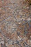 Forêt de Fontainebleau Image libre de droits