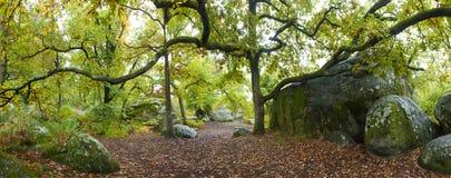 Forêt de Fontainebleau Photo libre de droits
