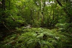 Forêt de fougère d'arbre photos stock