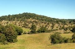 Forêt de Frances Image libre de droits