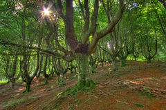 Forêt de Gorbeia Photos stock