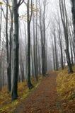 Forêt de hêtre Photos stock