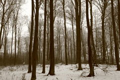 Forêt de hêtre Photographie stock