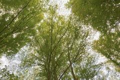 Forêt de hêtre d'Otzarreta Images stock