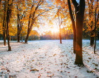Forêt de hêtre de montagne d'octobre avec la première neige d'hiver Image libre de droits