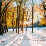 Forêt de hêtre de montagne d'octobre avec la première neige d'hiver Photographie stock