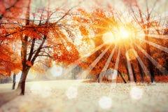 Forêt de hêtre de montagne d'octobre avec la première neige d'hiver, Photographie stock libre de droits