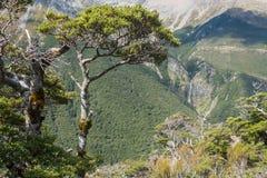 Forêt de hêtre en parc national du passage d'Arthur Images stock