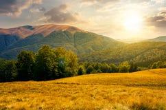 Forêt de hêtre près de montagne d'Apetska au coucher du soleil Images libres de droits