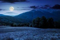 Forêt de hêtre près de montagne d'Apetska la nuit Photographie stock libre de droits