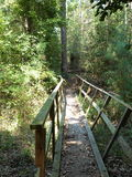 Forêt de habitant du Mississippi Images libres de droits