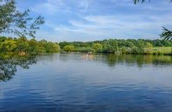 Forêt de Hainault, Essex, R-U - 28 août 2017 : Filles dans un aviron Photos stock