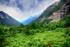 Forêt de haut mountaine en parc national d'Ordesa en Espagne Images stock