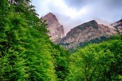 Forêt de haut mountaine en parc national d'Ordesa en Espagne Photographie stock libre de droits