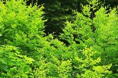 Forêt de haut mountaine en parc national d'Ordesa en Espagne Photographie stock