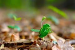 Forêt de jeunes usines au printemps Photographie stock libre de droits