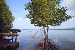 Forêt de Khung Kraben photo libre de droits