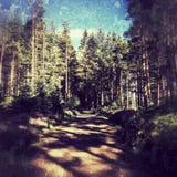 Forêt de Kielder Images libres de droits