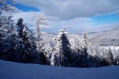Forêt de l'hiver Photographie stock libre de droits