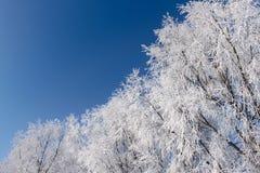 Forêt de l'hiver Photo libre de droits