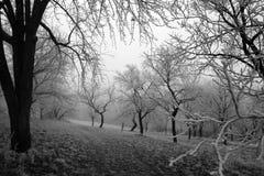 Forêt de l'hiver Images libres de droits