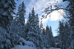 Forêt de l'hiver Photos stock