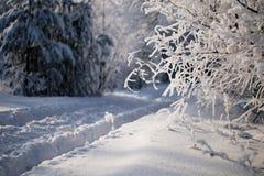Forêt de l'hiver Photographie stock
