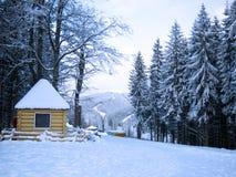 Forêt de l'hiver photos libres de droits