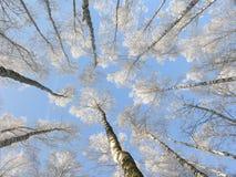 Forêt de l'hiver Image libre de droits