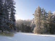 Forêt de l'hiver Images stock