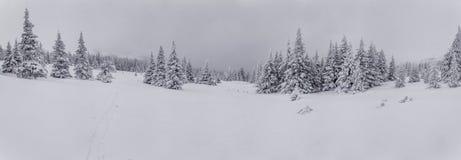 Forêt de l'hiver après chutes de neige Images libres de droits
