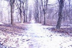 Forêt de l'hiver au soleil Photographie stock